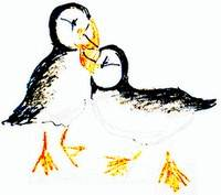 funny puffins