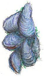 Mussel Shellfish